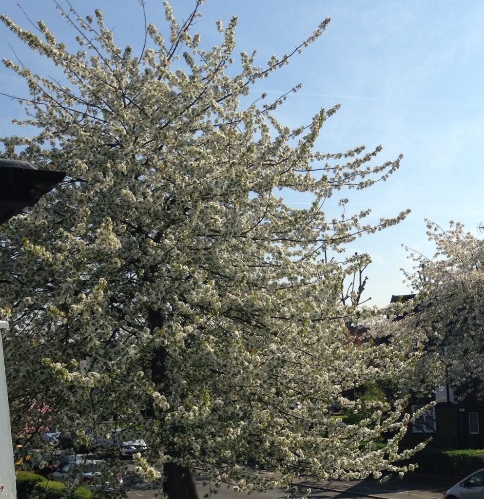 Spring through my window