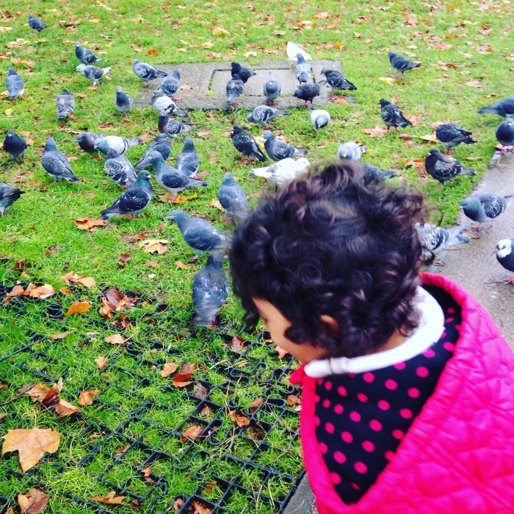 Pigeons and more pigeons!