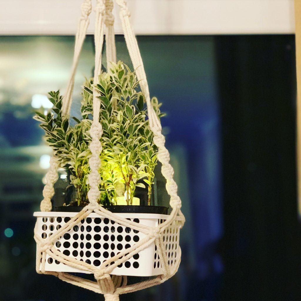Diwali hanging plant