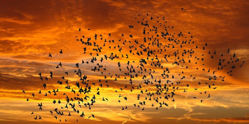 late bloomers: birds and sunset